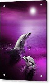 Dolphin Delights Acrylic Print by Julie L Hoddinott