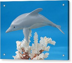 Dolphin On Coral Acrylic Print by Jack Murphy