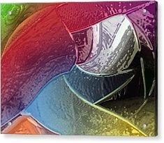 Dolphin Acrylic Print by Patrick Guidato