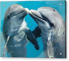 Dolphin Play Acrylic Print