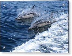 Dolphin Surfing Fantasy Acrylic Print