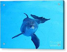 Dolphin Underwater Acrylic Print
