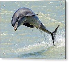 Dolphin Acrylic Print by Wade Aiken