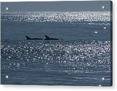 Dolphins And Reflections Acrylic Print by Allan Levin