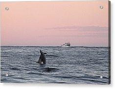 Acrylic Print featuring the photograph Dolphins At Play by Robert Banach
