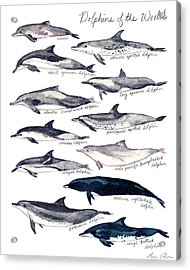 Dolphins Of The World Illustrated Chart Nautical Marine Biology Ocean Life Acrylic Print by Laura Row