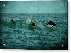Dolphins Acrylic Print by Sandy Keeton
