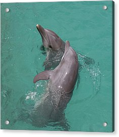 Dolphins Two Acrylic Print by Gwen Vann-Horn