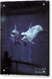 Dolphinspiration Acrylic Print
