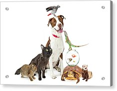 Domestic Pets Group Together With Copy Space Acrylic Print