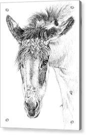Donkey 1 Acrylic Print