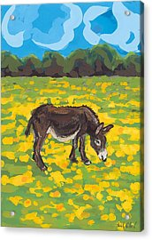 Donkey And Buttercup Field Acrylic Print by Sarah Gillard