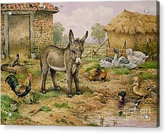 Donkey And Farmyard Fowl  Acrylic Print by Carl Donner