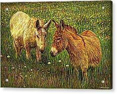 Donkey Confidential Acrylic Print