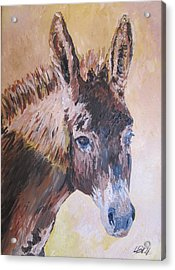 Donkey In The Sunlight Acrylic Print by Leonie Bell
