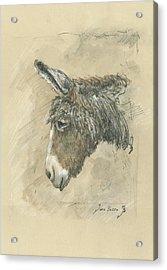 Donkey Portrait Acrylic Print