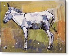 Donkey Stallion, Ronda Acrylic Print by Mark Adlington