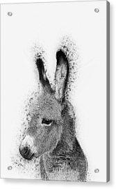 Donkey Acrylic Print by Taylan Apukovska