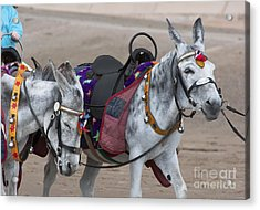 Donkeys On Blackpool Beach Acrylic Print