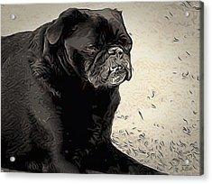 Donnas Bulldog Acrylic Print