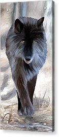 Acrylic Print featuring the painting Gray Wolf Treading Carefully by James Shepherd