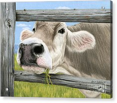 Don't Fence Me In Acrylic Print by Sarah Batalka