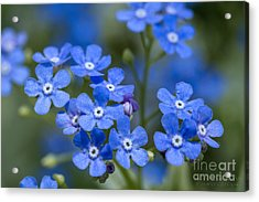 Don't Forget Acrylic Print
