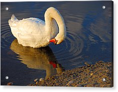 Don't Hate Me  Cause I'm Beautiful Acrylic Print