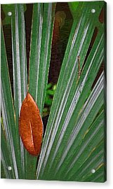 Acrylic Print featuring the photograph Don't Leaf by Donna Bentley
