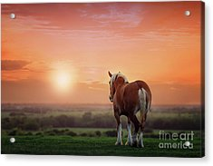 Don't Let The Sun Go Down On Me Acrylic Print by Tamyra Ayles
