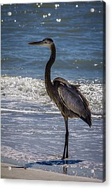 Don't Make Me Fly Acrylic Print by Marvin Spates
