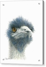 Dont Mess With Emu Acrylic Print by Phyllis Howard