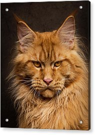 Don't Mess With Me. Acrylic Print