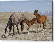Don't Worry Mom I Got This... Acrylic Print by Nicole Markmann Nelson