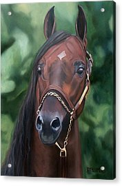 Dont Worry Saddlebred Sire Acrylic Print by Donna Thomas