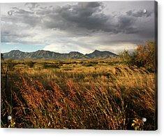 Dos Cabezas Grasslands Acrylic Print