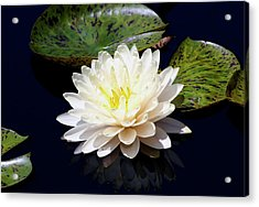 Dotty White Lotus And Lily Pads 0030 Dlw_h_2 Acrylic Print