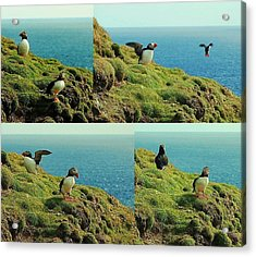 Acrylic Print featuring the photograph Double Act by HweeYen Ong