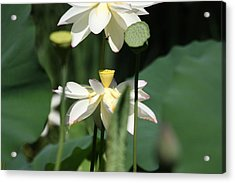 Double Blossom Acrylic Print by Dawn Davis