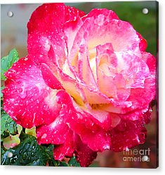 Double Delight Acrylic Print by Patricia Griffin Brett