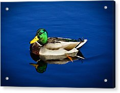 Double Duck Acrylic Print