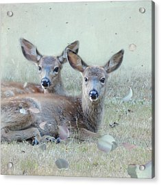 Acrylic Print featuring the photograph Double Gaze by Sally Banfill
