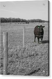 Acrylic Print featuring the photograph Double Post by Dylan Punke
