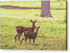 Acrylic Print featuring the photograph Double Take by Scott Carruthers