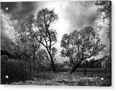 Double Tree Acrylic Print