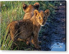 Acrylic Print featuring the photograph Double Trouble by Karen Lewis