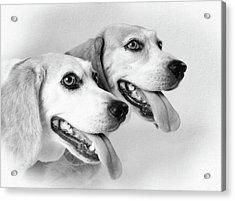 Double Trouble Acrylic Print