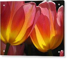 Double Tulips Acrylic Print