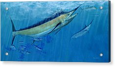 Double Up Marlins Acrylic Print by Kevin Brant