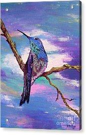 Dougs Hummingbird Acrylic Print